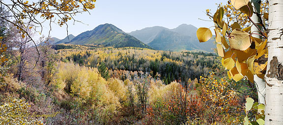 Splendor-Aspen forest in mountains of Utah